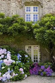 best 25 french cottage garden ideas on pinterest french garden