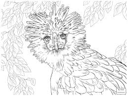 coloring pages bald eagle in flight birds eagle colorpages7 com