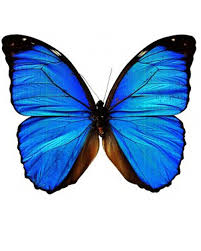blue butterfly design