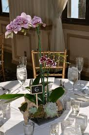 orchid centerpieces image result for orchid plant wedding centerpiece wedding