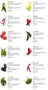 best 25 chilli plant ideas on chilli seeds pepper