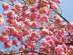 free images tree branch leaf flower petal bloom