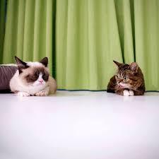 Grumpy Cat Meme Happy Birthday - happy birthday grumpy cat all things fadra