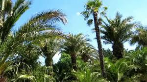 bad pyrmont der nördlichste palmengarten europas bad pyrmont the