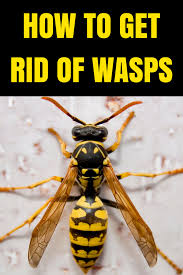 does soapy water kill wasps u0026 hornets yellow jackets
