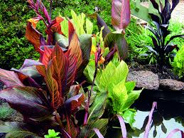 tesselaar plants helps rev up your outdoor living with easy care
