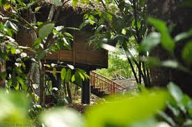 Honeymoon Cottages Ubud by Cottage In The Jungle Bamboo Honeymoon Eco Cottage In