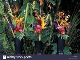 Flowers For Sale N A Usa Hawaii Maui Hana Tropical Flowers For Sale In Market