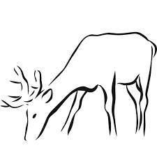 drawing outlines of animals details about deer outline animal wall drawing outlines of animals details about deer outline animal wall sticker wall art decal