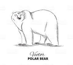 polar bear hand drawn illustration stock vector art 532034190 istock
