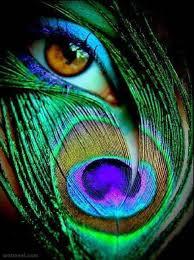 Creative Photography Creative Photography Eye Peacock Image