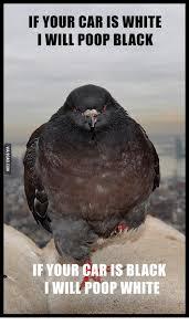 Pooping Memes - 25 best memes about bird poop meme bird poop memes