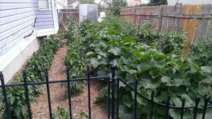 vegetable garden plans your first step