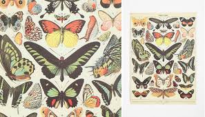 bedroom designs beautiful butterfly specimen poster with creative
