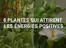 chambre feng shui 6 plantes qui attirent les énergies positives selon le feng shui