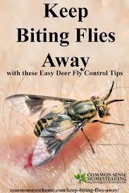 Cutter Bug Free Backyard 259 Best Bug Repellant U0026 Bug Bites Images On Pinterest