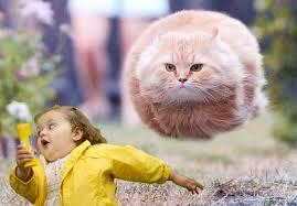 Running Kid Meme - the last twinkie funny things meme and humor