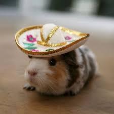 Hamster Halloween Costumes Animal Halloween Costumes Pet 15