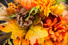 free photo fall flowers thanksgiving flowers free image on