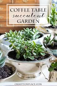 Indoor Garden Containers - 277 best garden succulents images on pinterest succulents