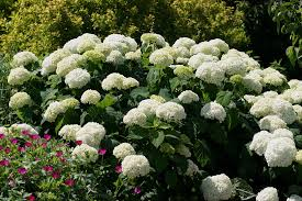 Most Fragrant Plants - nighttime and evening gardens state by state gardening web articles