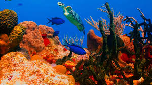 3 hours of beautiful sea turtles coral reef fish ocean fish
