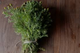 forage it pineapple weed tea grow it cook it can it