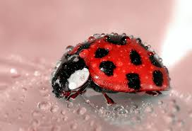 close up photo of lady bug free stock photo