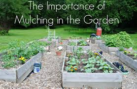 What Kind Of Mulch For Vegetable Garden by The Importance Of Mulching In The Garden We Got Real