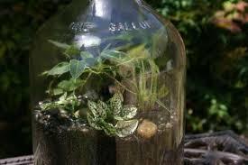 the hobby of terrariums