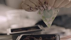 ikea presents plant a seed youtube