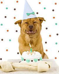 dog birthday party puprwear dog boutique pered dog designer custom pet dog