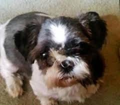 boxer dog vine lost dogs in vine grove ky lost my doggie