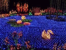 Botanical Gardens Lights Explore Bellevue S Garden D Lights At Bellevue Botanical Gardens