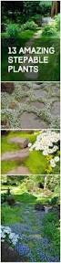 Backyard Ground Cover Options Top 10 Plants And Ground Cover For Your Paths And Walkways