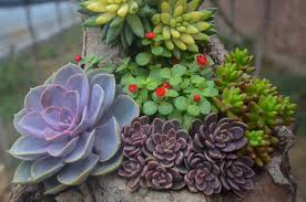 Low Light Succulents by Learn About Nature Types Of Succulents Learn About Nature