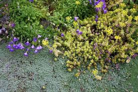Garden Growing Zones - planting u0026 growing hardiness zones for gardening homesteading