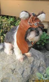star wars dog halloween costumes ewok dog halloween costume photo album pet costumes cat dog