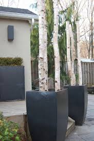outdoor holiday planters outdoor christmas birch and christmas
