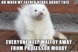 Ferret Meme - malfoy ferret meme on imgur