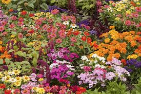 images of plants 5 easy tips to keep plants blooming longer