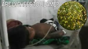 lychee fruit inside killer lychees fruit enjoyed for health benefits in britain could