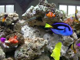 free picture group fish fish finding nemo