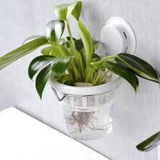 plants for office office design decorative plants for office decorative plants for