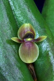 Orchids Facts by 253 Best Exotic Orchids Images On Pinterest Flowers Plants And