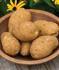 Patio Potato Planters Rio Grande Russet Potato Seeds Vegetable Seeds And Plants At