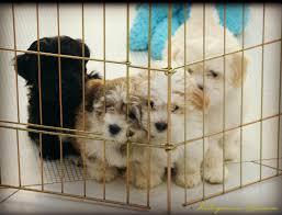 choosing a reputable breeder