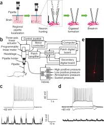 automated whole cell patch clamp electrophysiology of neurons in