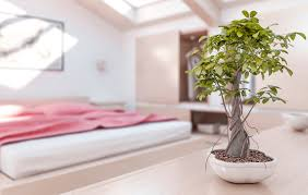 100 plants for the bedroom 5 perfect house plants for the