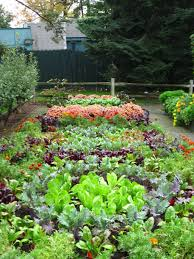Types Of Community Gardens - backyard gardening with different types of vegetables nice